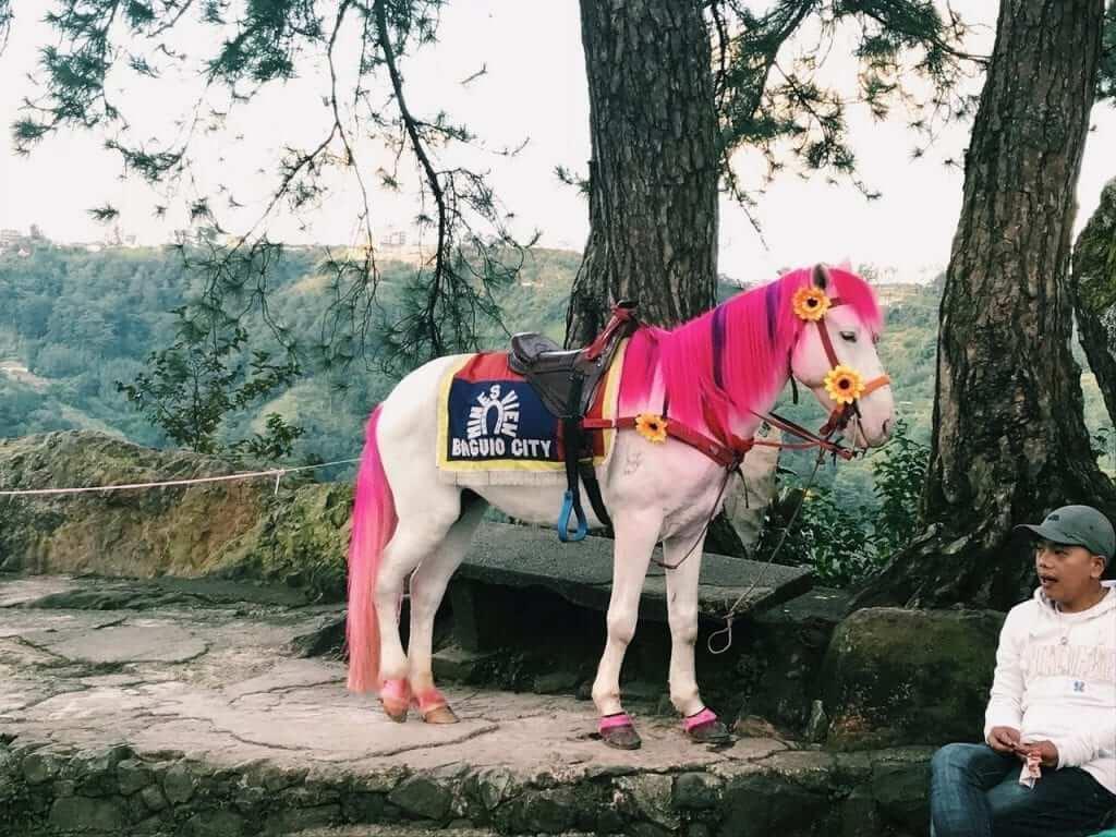 Baguio city horse