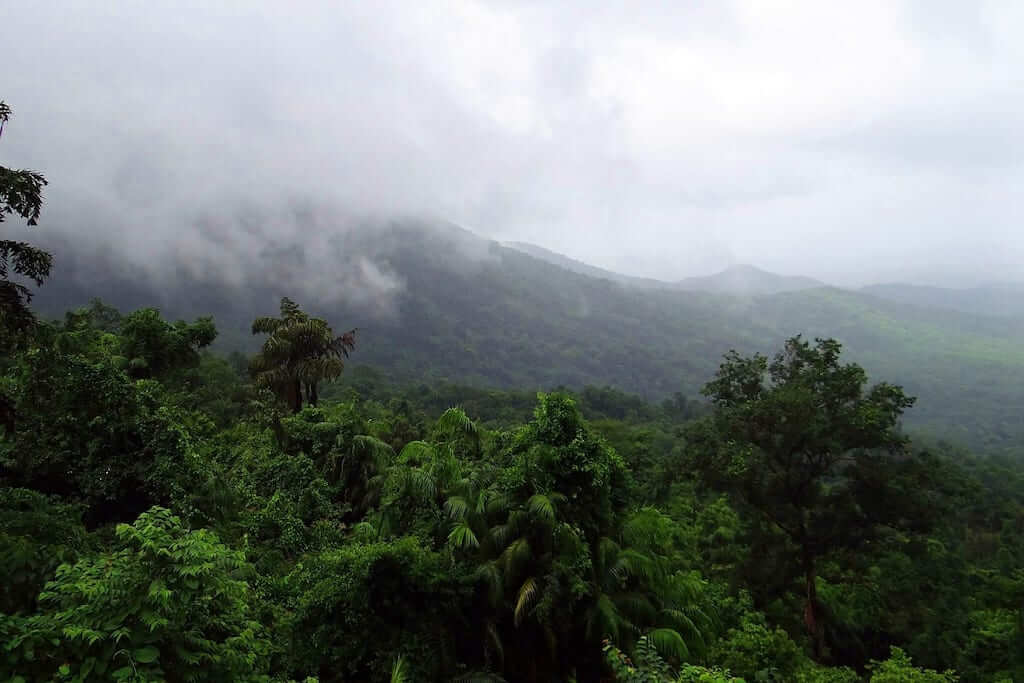 A view from Mollem National Park in Goa