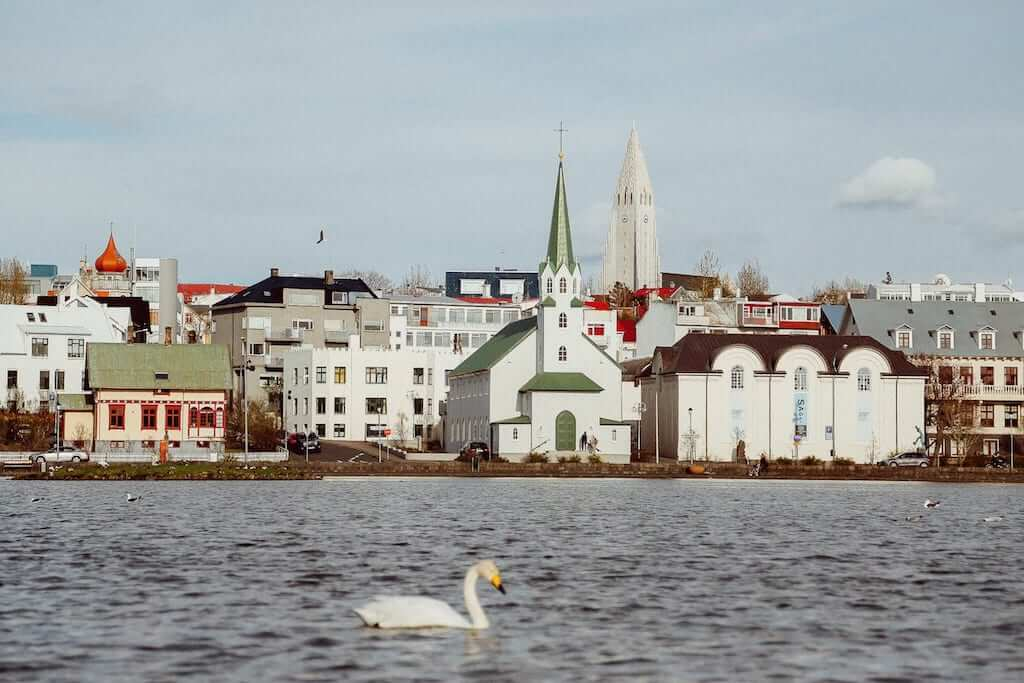 Reykjavik swan