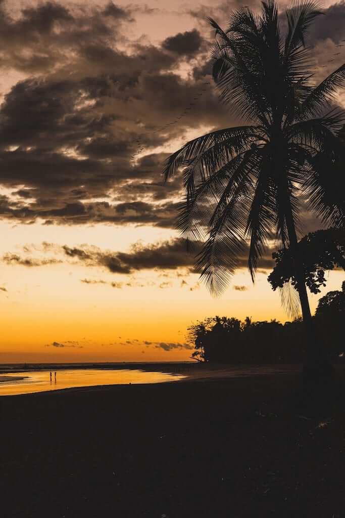 coconut tree sunset