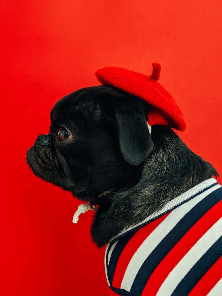 dog wear beret