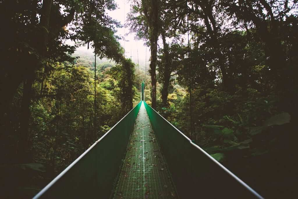 hike bridge monteverde
