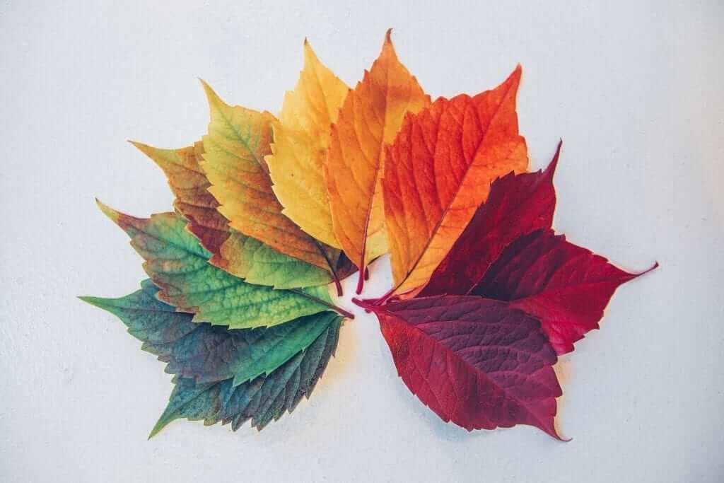 leaves seasons
