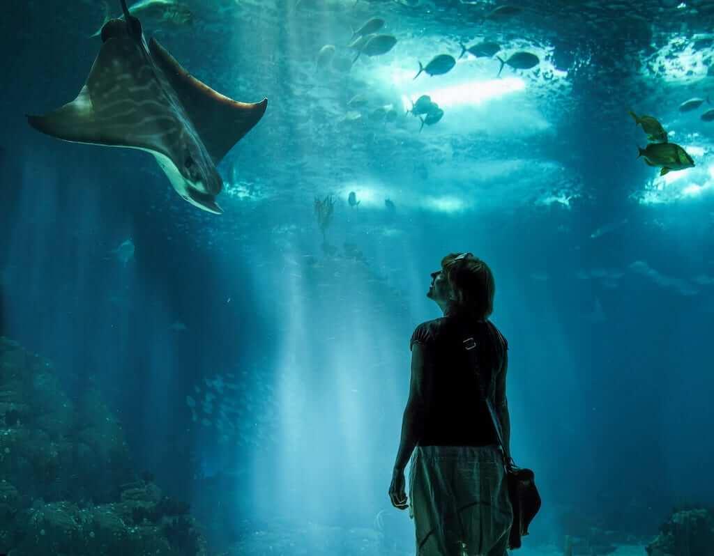 oceanario lisbon aquarium