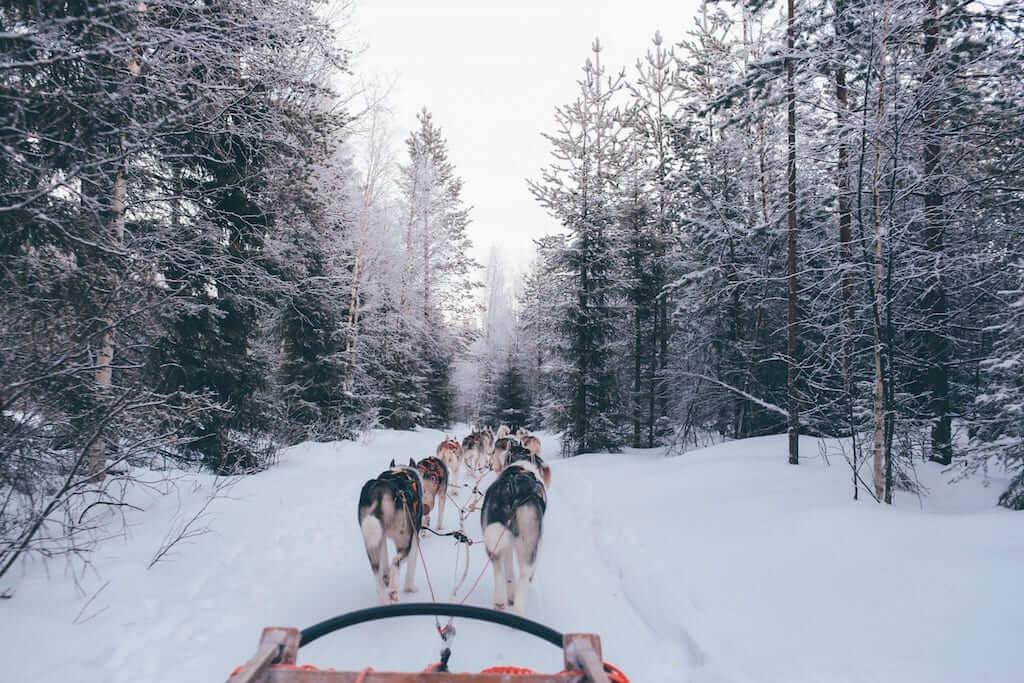 santa claus village dog sled