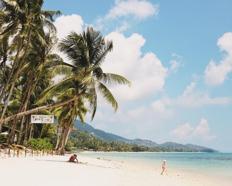 beach palm trees thailand