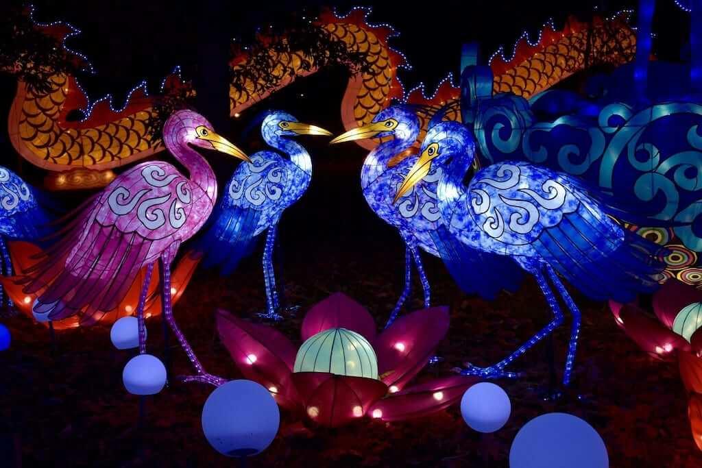 chinese lantern birds