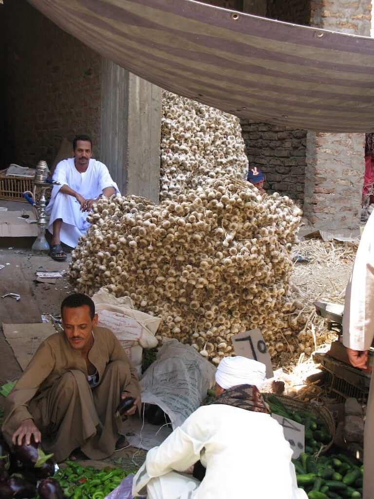 garlic egypt