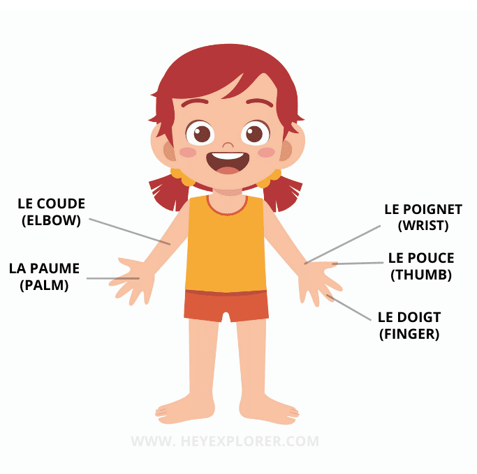 hands and arms in french