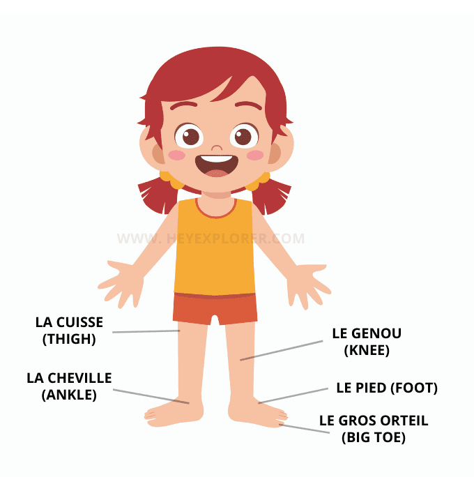 the legs in french