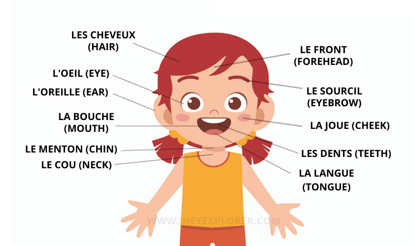 the face in french