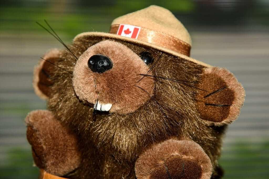 canadian bear souvenirs