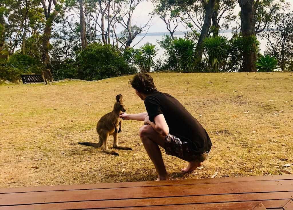 man touching a kangaroo in australia