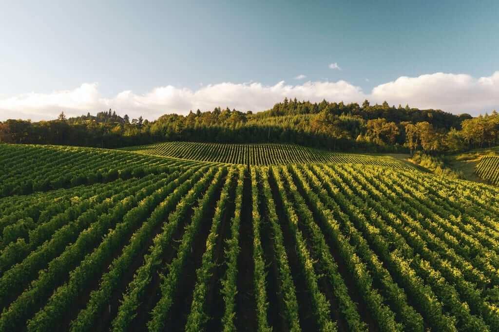 Green fields of the Willamette Valley