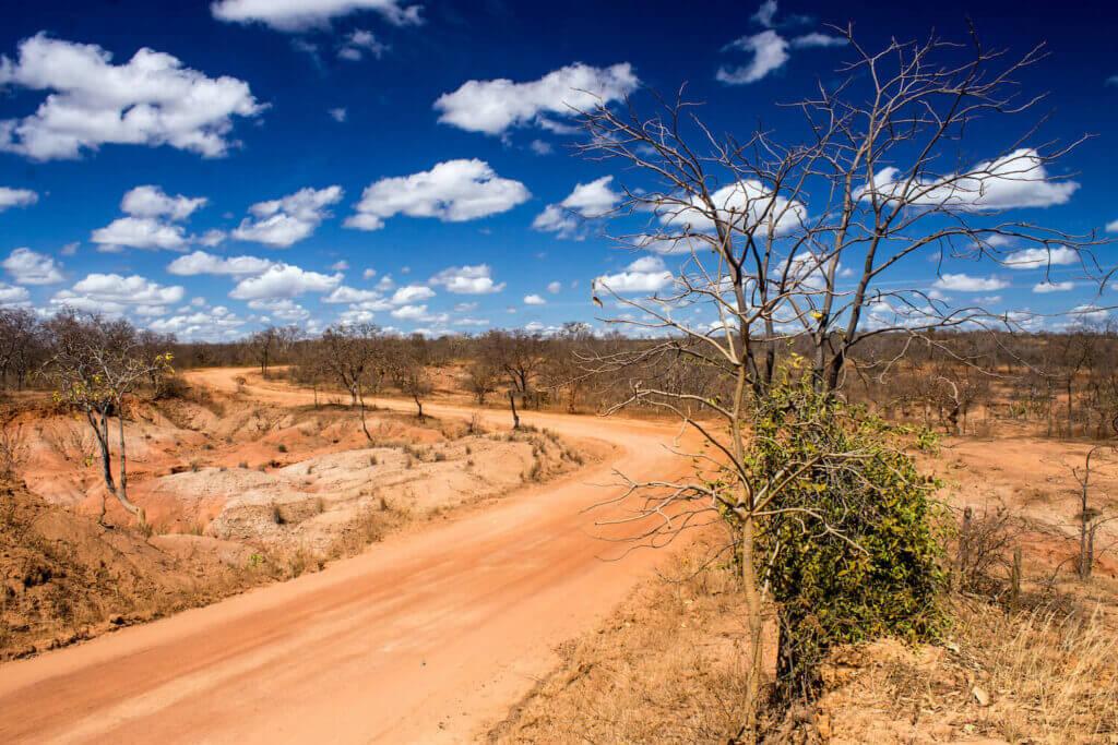 brazil shrubland