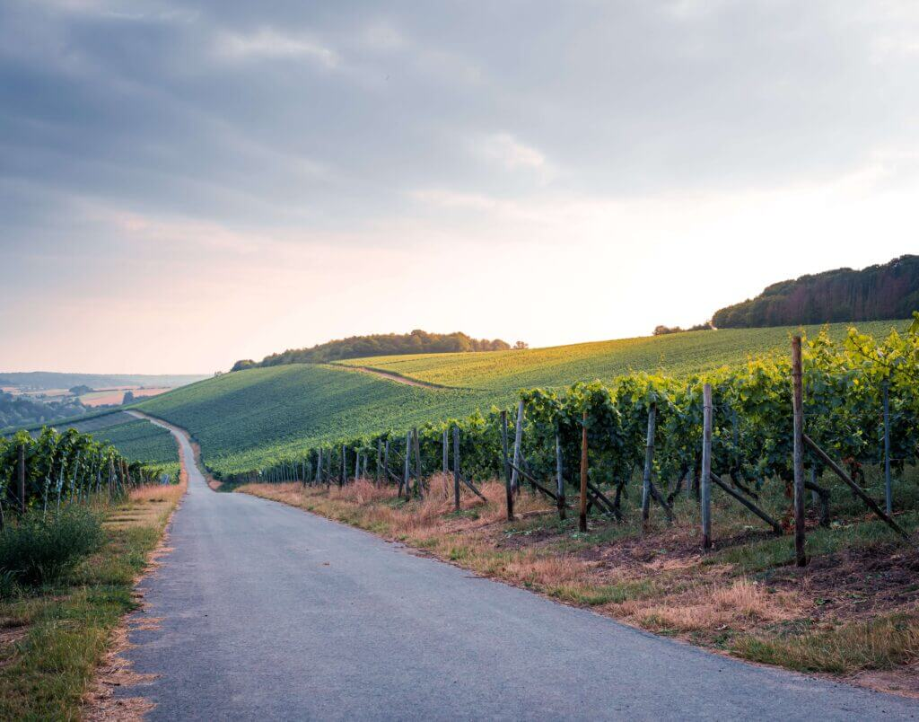 Vineyard in Luxembourg