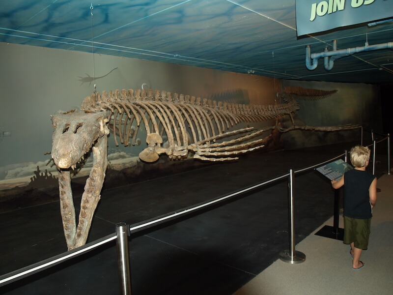 Canadian Fossil Discovery Center