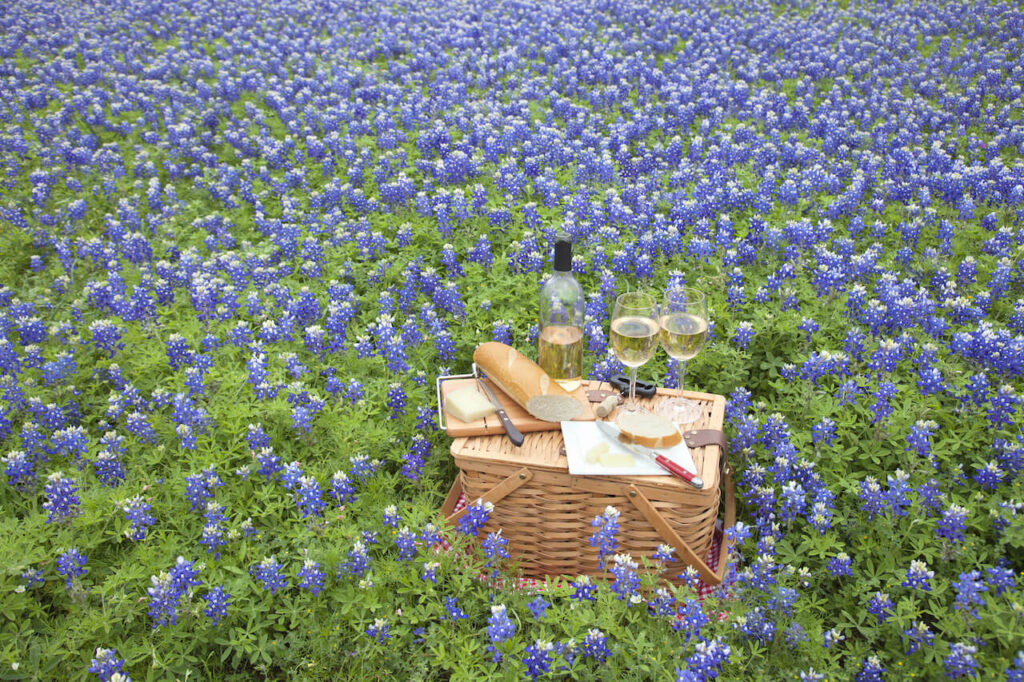 Picnic and wine in the middle of bluebonnets